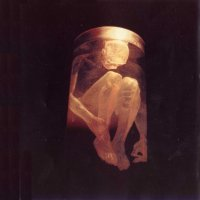 [Alice In Chains Nothing Safe Album Cover]