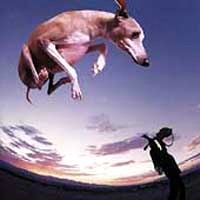 [Paul Gilbert Flying Dog Album Cover]