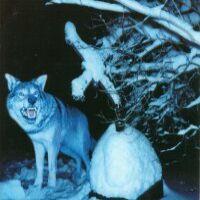 Throes Of Dawn Pakkasherra Album Cover